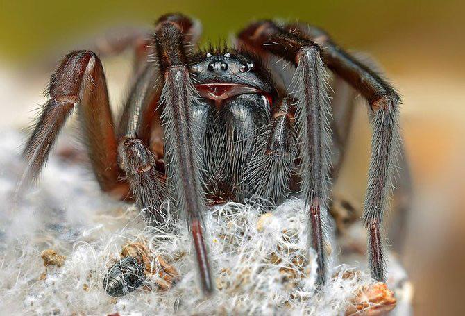 In intimitatea insectei cu Ondrej Pakan - Poza 10