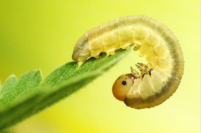 In intimitatea insectei cu Ondrej Pakan - Poza 12