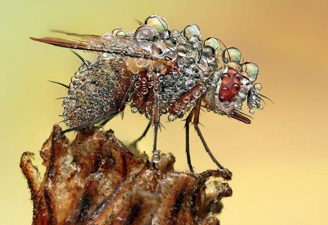 In intimitatea insectei cu Ondrej Pakan - Poza 13