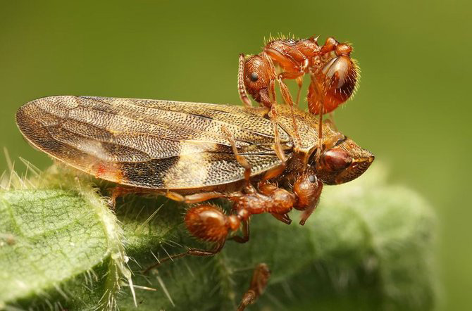 In intimitatea insectei cu Ondrej Pakan - Poza 14