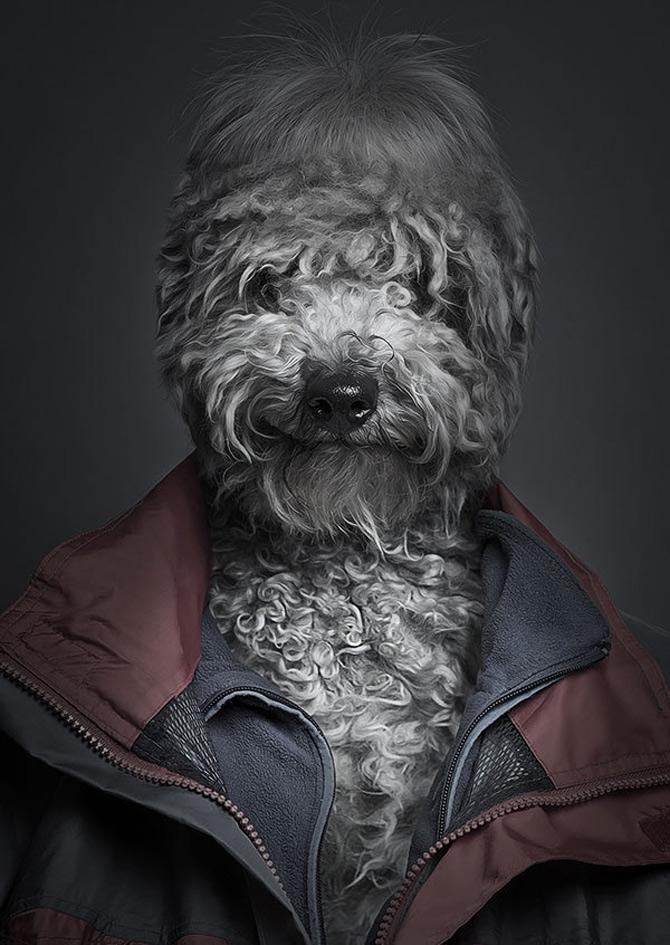 Cainii la moda, de Sebastian Magnani