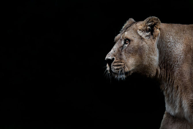 Animalele imblanzite de fotografa Sue Demetriou - Poza 1