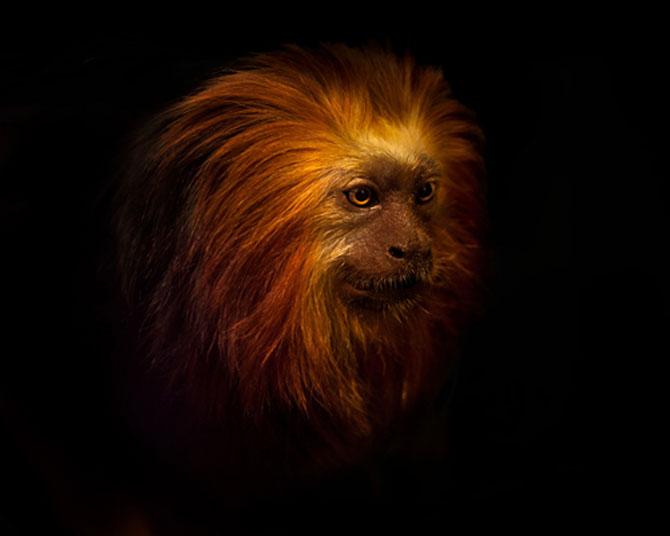 Animalele imblanzite de fotografa Sue Demetriou - Poza 2