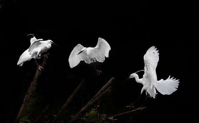 Animalele imblanzite de fotografa Sue Demetriou - Poza 3