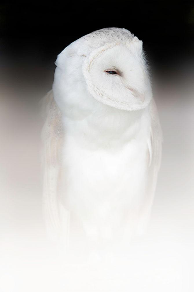 Animalele imblanzite de fotografa Sue Demetriou - Poza 4