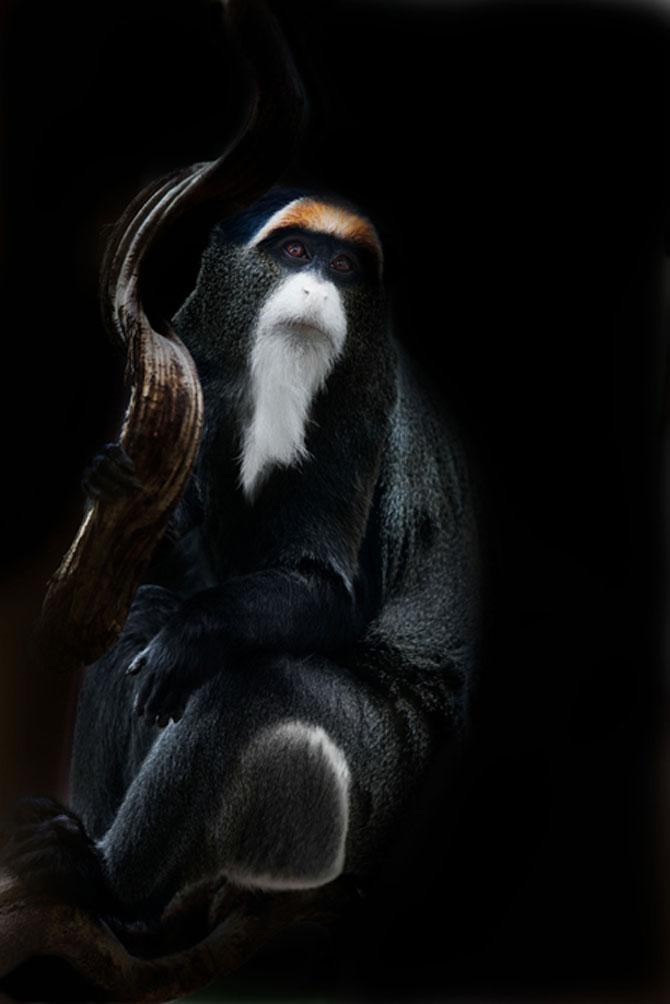 Animalele imblanzite de fotografa Sue Demetriou - Poza 5