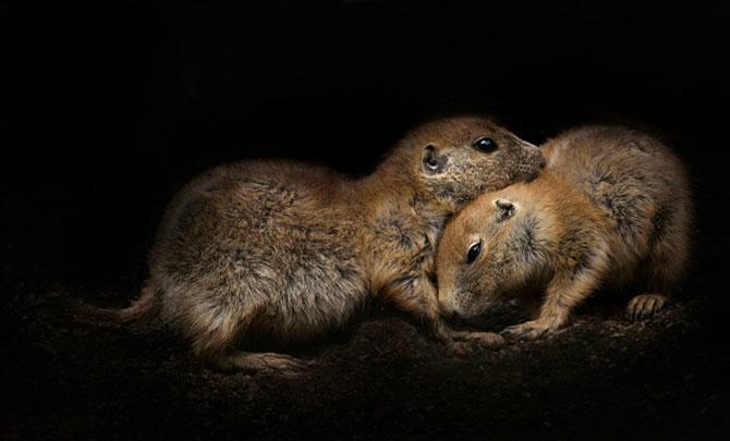 Animalele imblanzite de fotografa Sue Demetriou - Poza 6