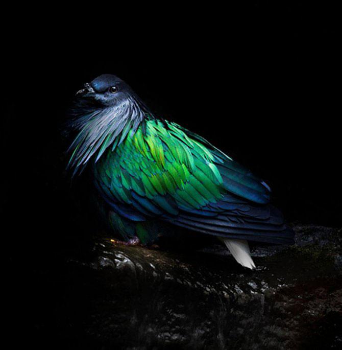 Animalele imblanzite de fotografa Sue Demetriou - Poza 7