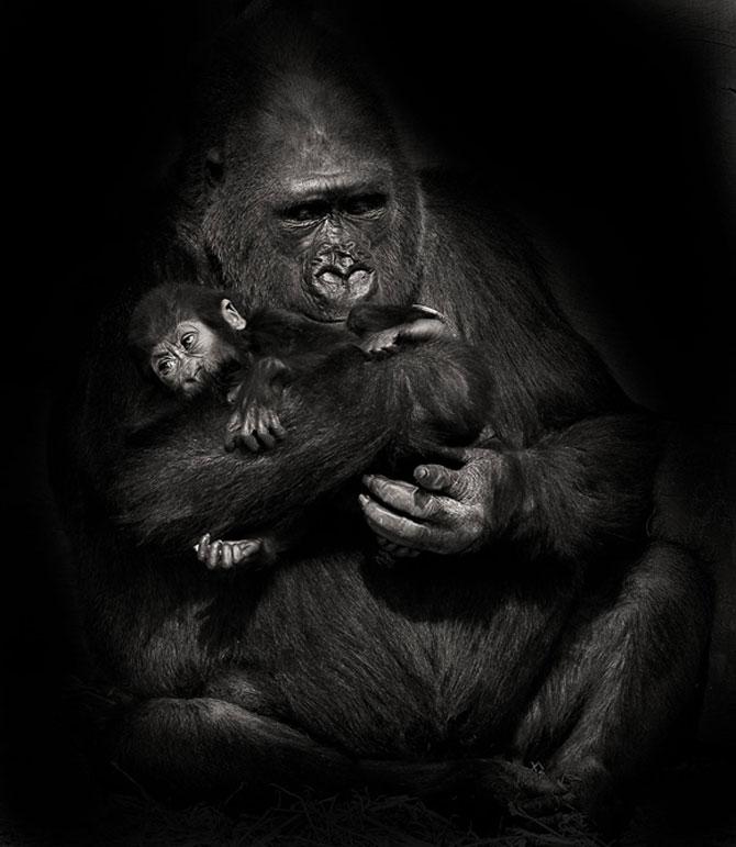 Animalele imblanzite de fotografa Sue Demetriou - Poza 8