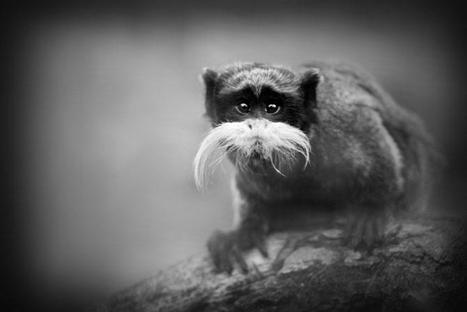 Animalele imblanzite de fotografa Sue Demetriou - Poza 9