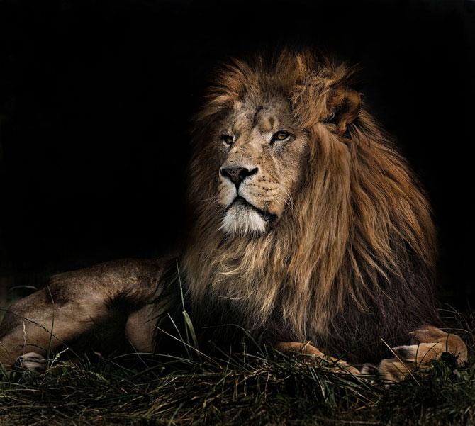 Animalele imblanzite de fotografa Sue Demetriou - Poza 10