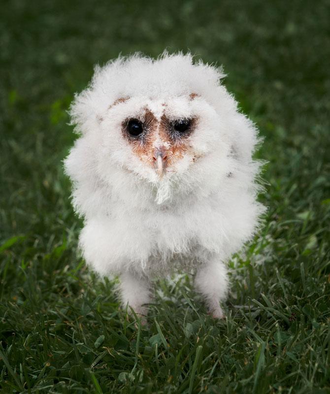 Animalele imblanzite de fotografa Sue Demetriou - Poza 11