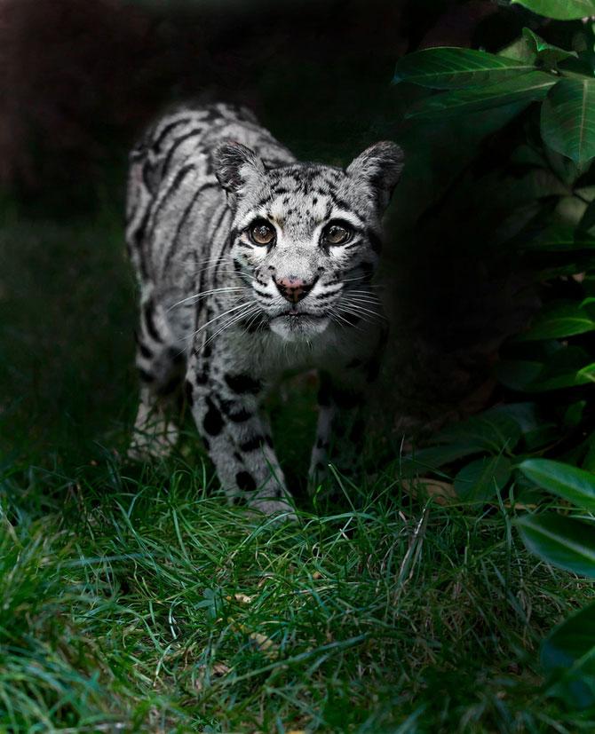 Animalele imblanzite de fotografa Sue Demetriou - Poza 12