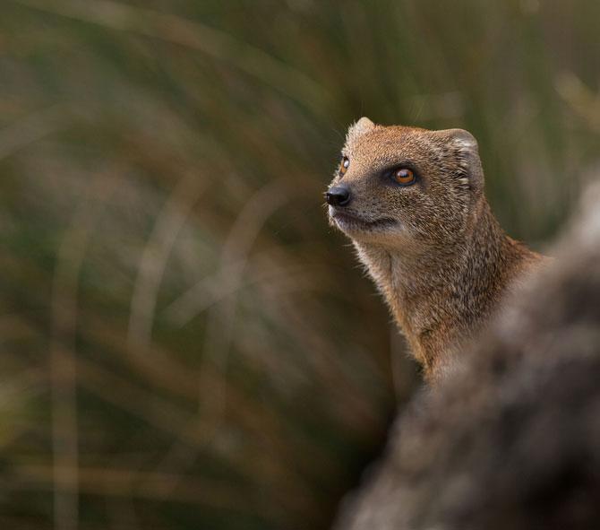 Animalele imblanzite de fotografa Sue Demetriou - Poza 13