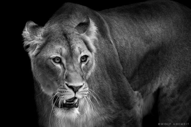 Portrete expresive in alb-negru, de Wolf Ademeit - Poza 2