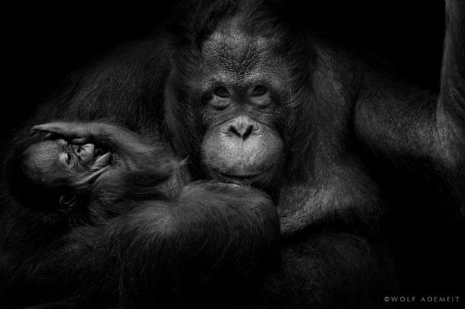 Portrete expresive in alb-negru, de Wolf Ademeit - Poza 3