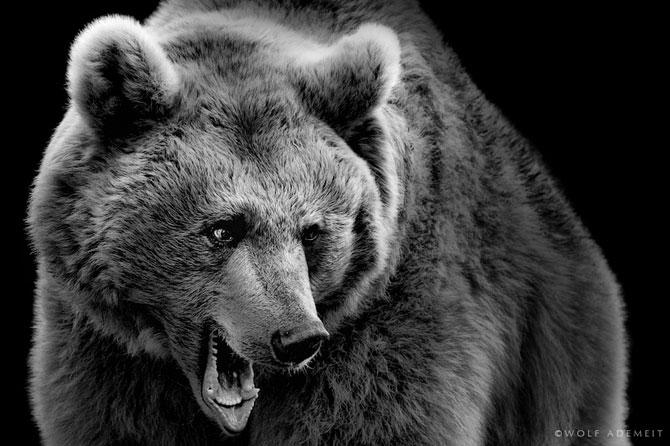 Portrete expresive in alb-negru, de Wolf Ademeit - Poza 6
