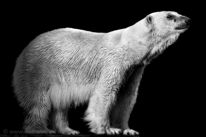 Portrete expresive in alb-negru, de Wolf Ademeit - Poza 7