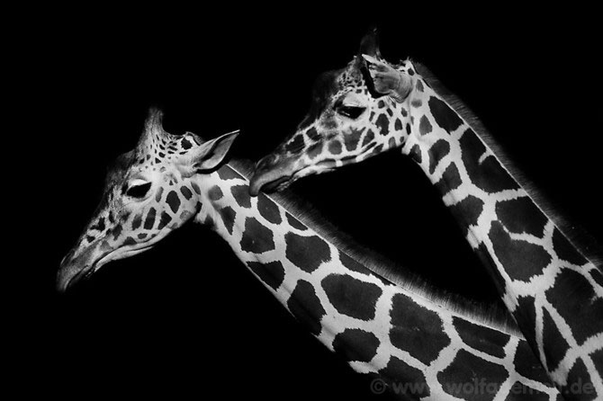 Portrete expresive in alb-negru, de Wolf Ademeit - Poza 9