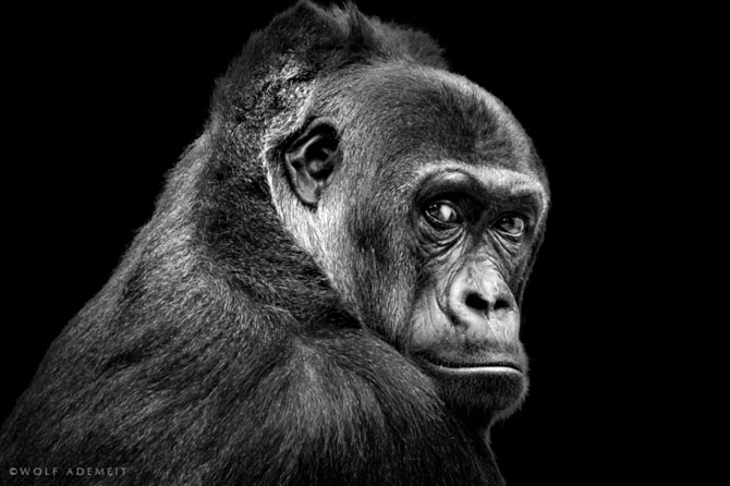 Portrete expresive in alb-negru, de Wolf Ademeit - Poza 10
