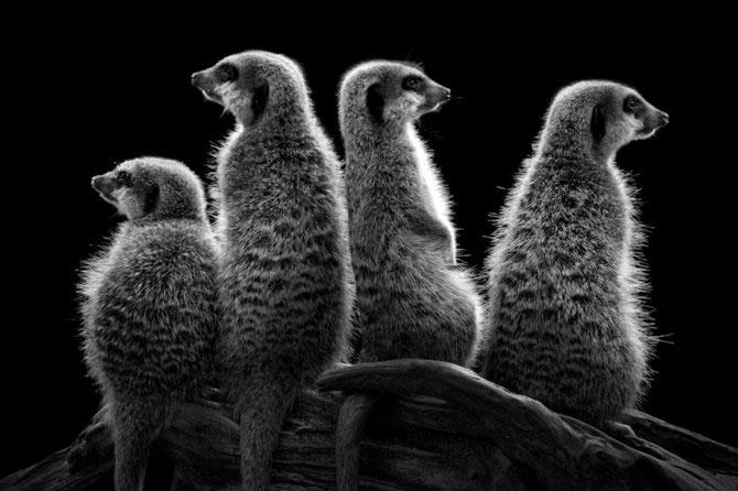 Portrete expresive in alb-negru, de Wolf Ademeit - Poza 12