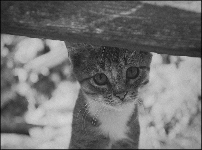 13 pisici alb-negru - Poza 1