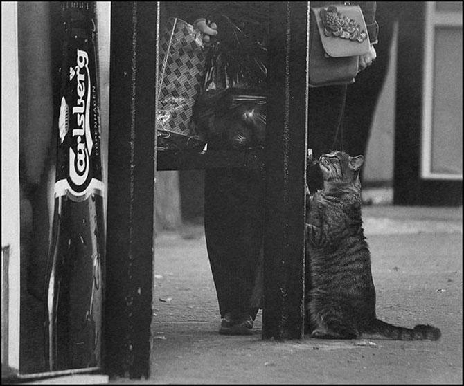 13 pisici alb-negru - Poza 5