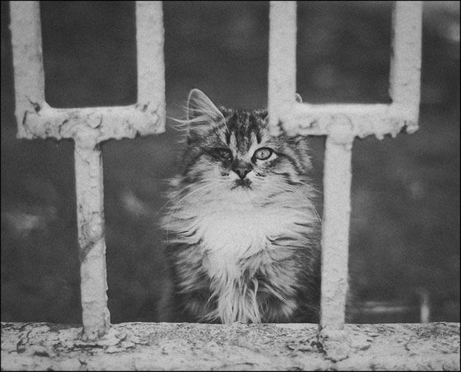 13 pisici alb-negru - Poza 6