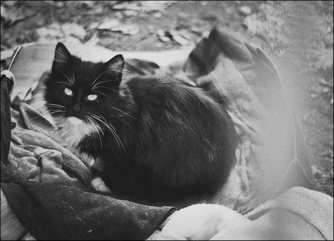 13 pisici alb-negru - Poza 7