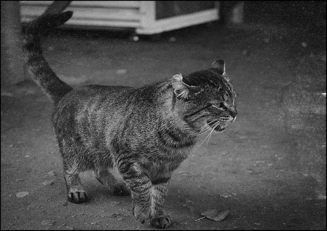 13 pisici alb-negru - Poza 8