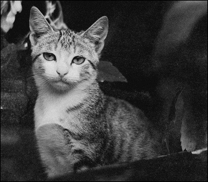 13 pisici alb-negru - Poza 9