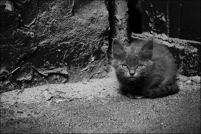 13 pisici alb-negru - Poza 11