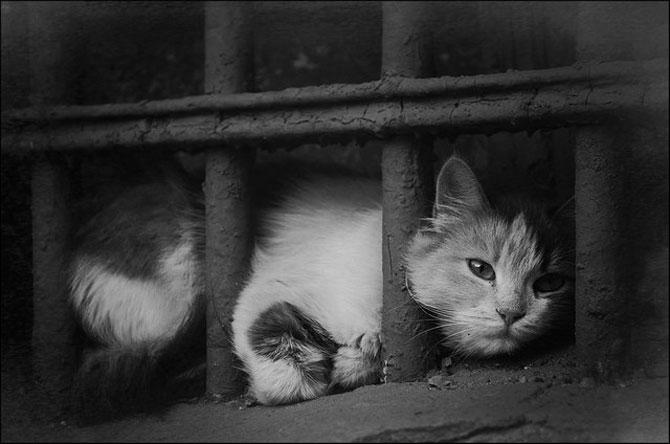 13 pisici alb-negru - Poza 12
