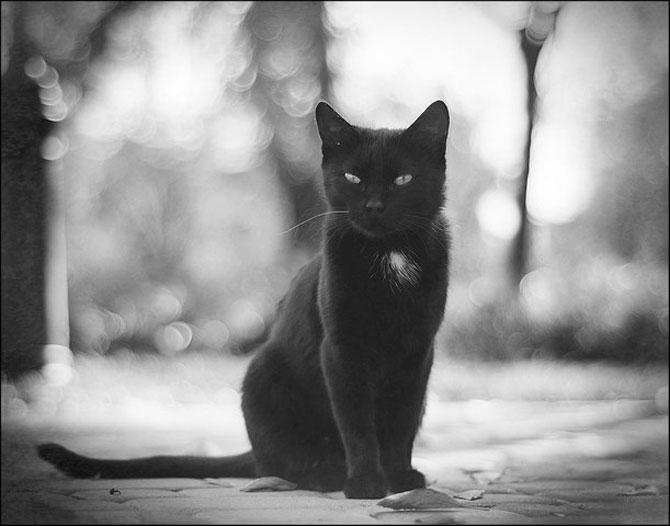 13 pisici alb-negru - Poza 13
