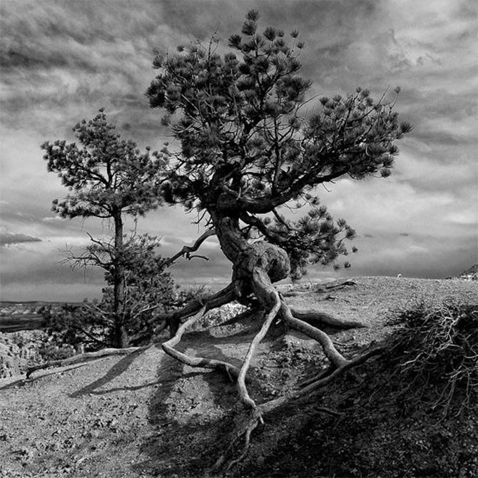 Alte povesti, in alb-negru - Poza 7