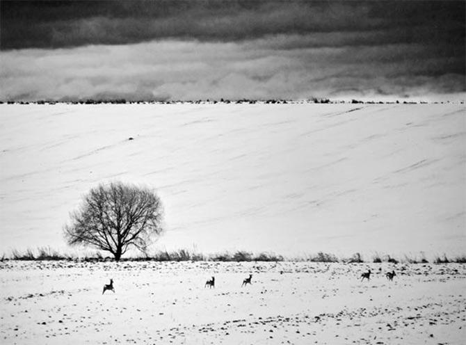 Alte povesti, in alb-negru - Poza 8