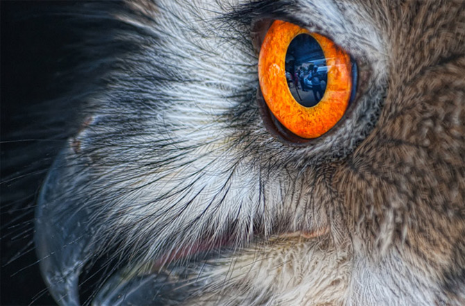 Portret cu uliu, leopard si maimuta de Joaquin Granell - Poza 9