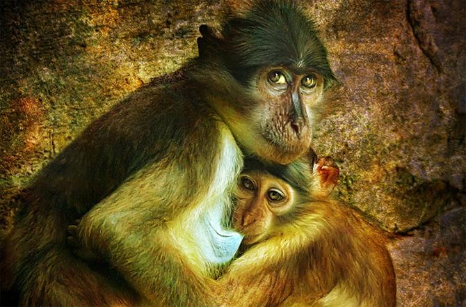 Portret cu uliu, leopard si maimuta de Joaquin Granell - Poza 13