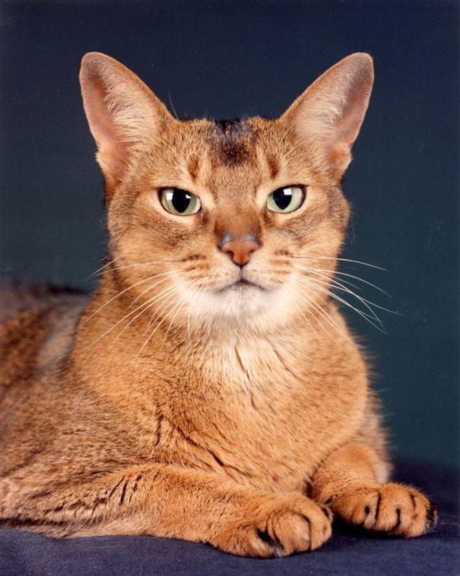 10 poze cu caini si pisici, de Ren Netherland - Poza 5
