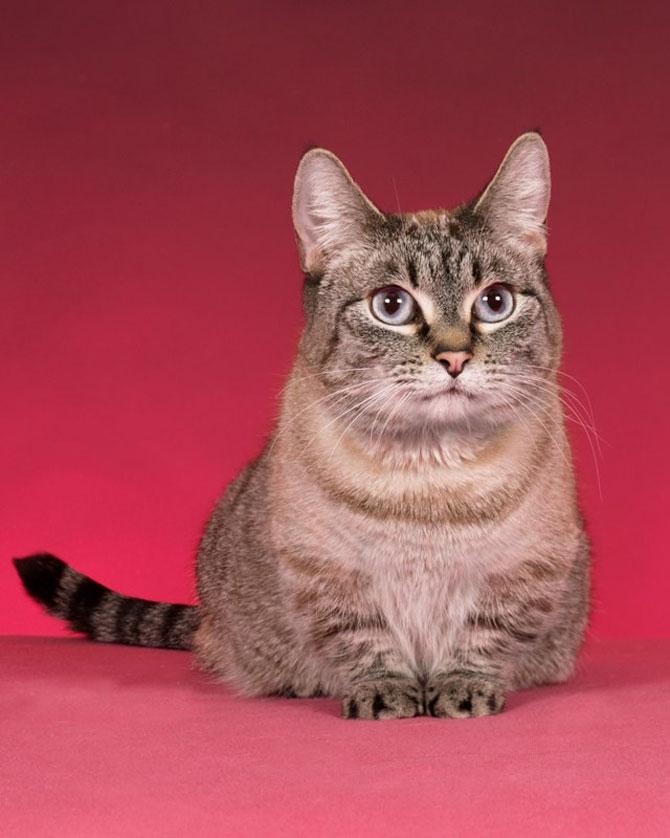 10 poze cu caini si pisici, de Ren Netherland - Poza 6