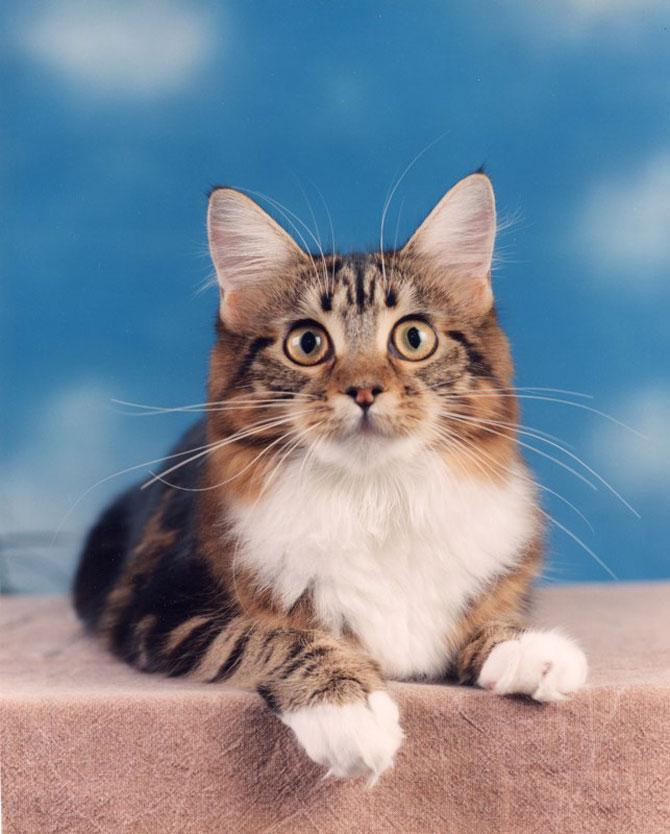 10 poze cu caini si pisici, de Ren Netherland - Poza 8