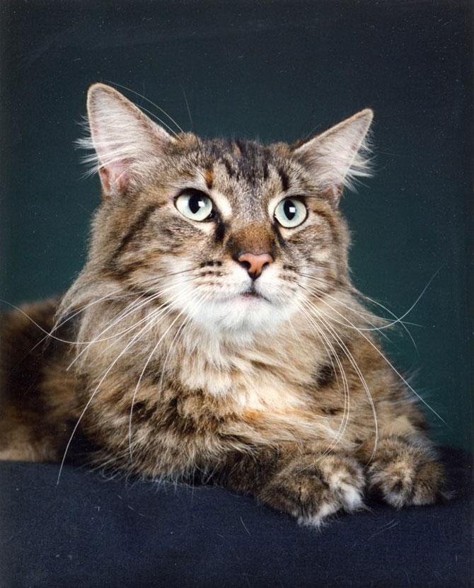 10 poze cu caini si pisici, de Ren Netherland - Poza 9