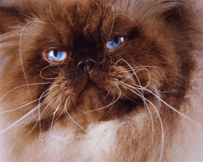 10 poze cu caini si pisici, de Ren Netherland - Poza 10