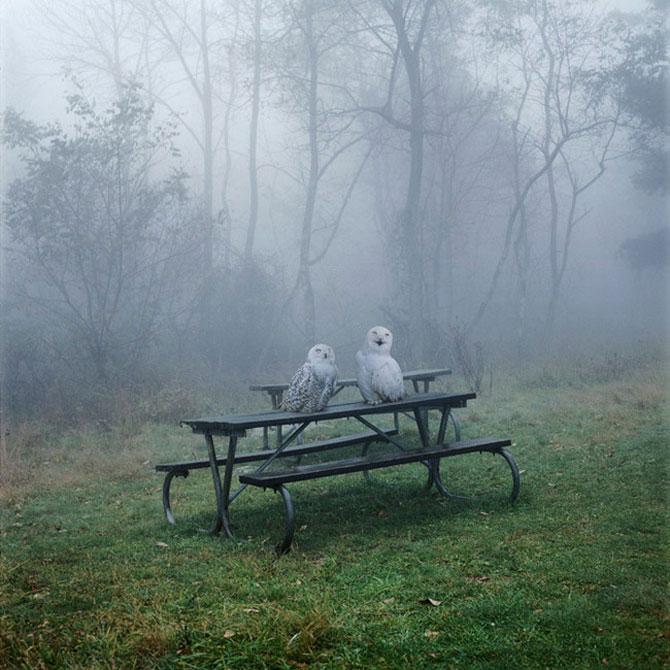 Fiinte umane, nu animale, de Simen Johan - Poza 1