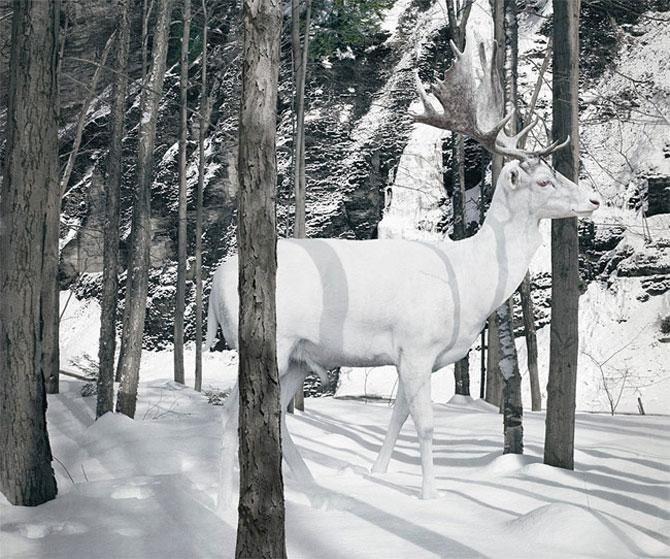 Fiinte umane, nu animale, de Simen Johan - Poza 2