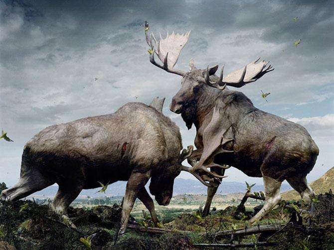 Fiinte umane, nu animale, de Simen Johan - Poza 3