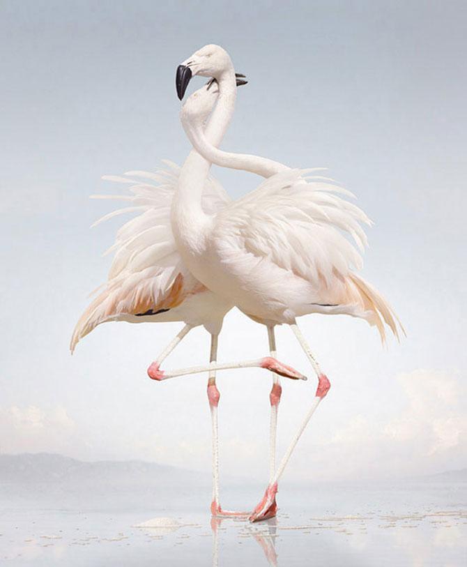 Fiinte umane, nu animale, de Simen Johan - Poza 7