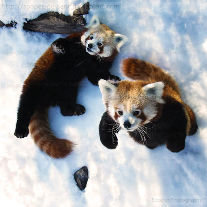 42 de super poze cu animale de Sooper Deviant - Poza 4