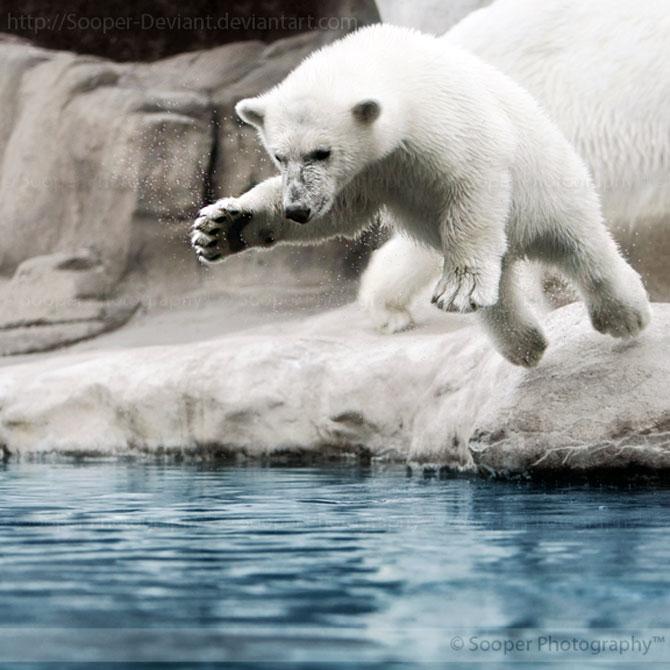 42 de super poze cu animale de Sooper Deviant - Poza 7