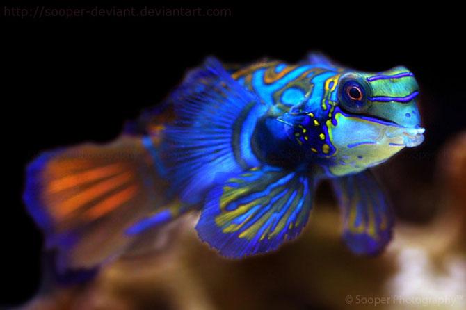42 de super poze cu animale de Sooper Deviant - Poza 9